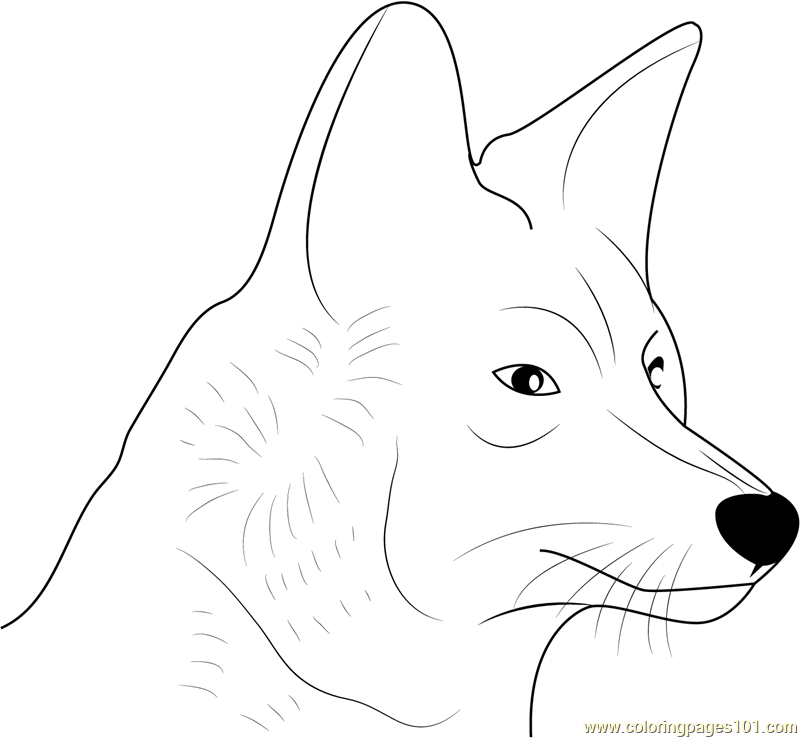Coyote Face Coloring Page Free Coyote Coloring Pages