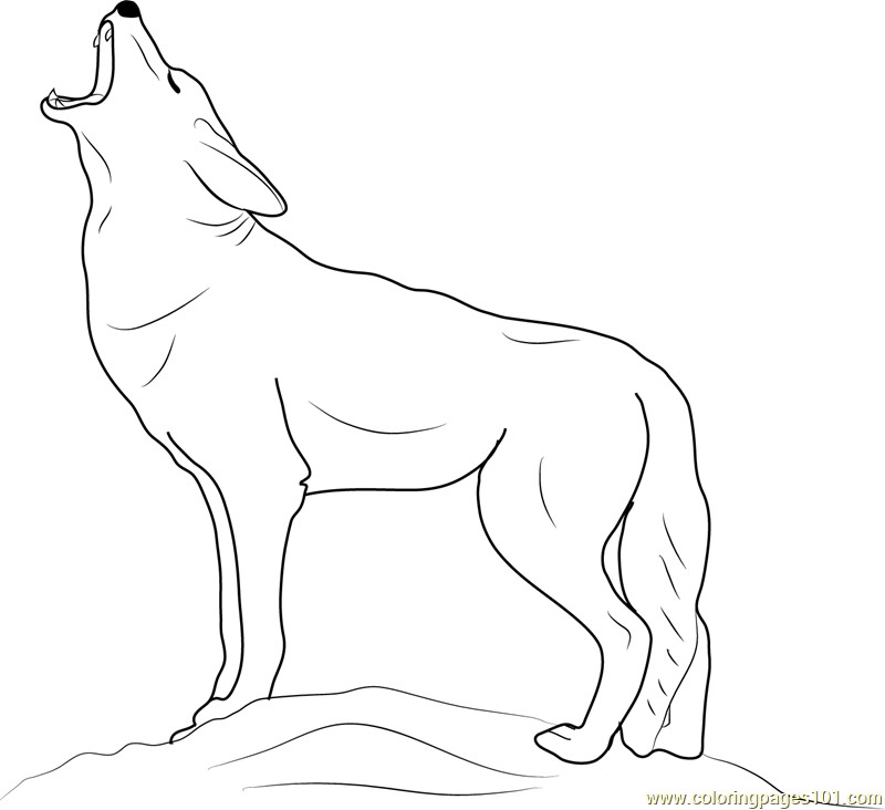 Ordinaire Coyote Howling Coloring Page