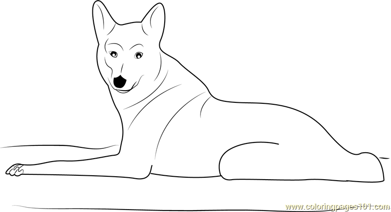 Coyote Looking at You Coloring Page Free Coyote Coloring