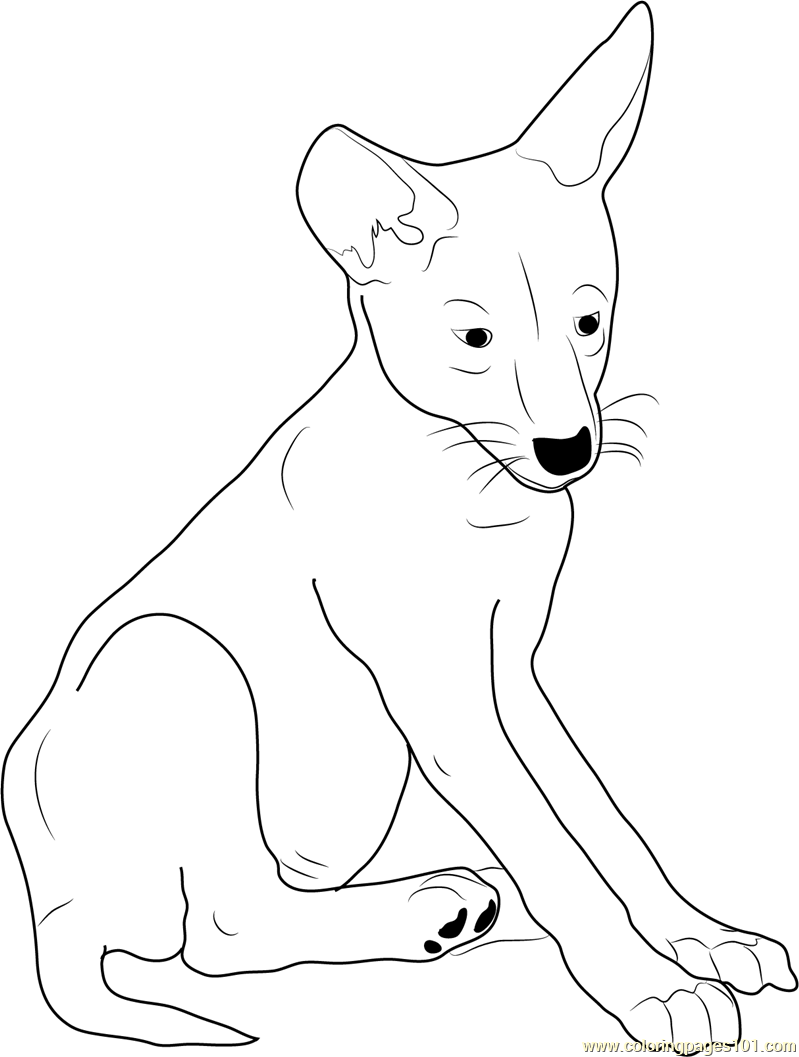 Coyote Pup Coloring Page Free Coyote Coloring Pages