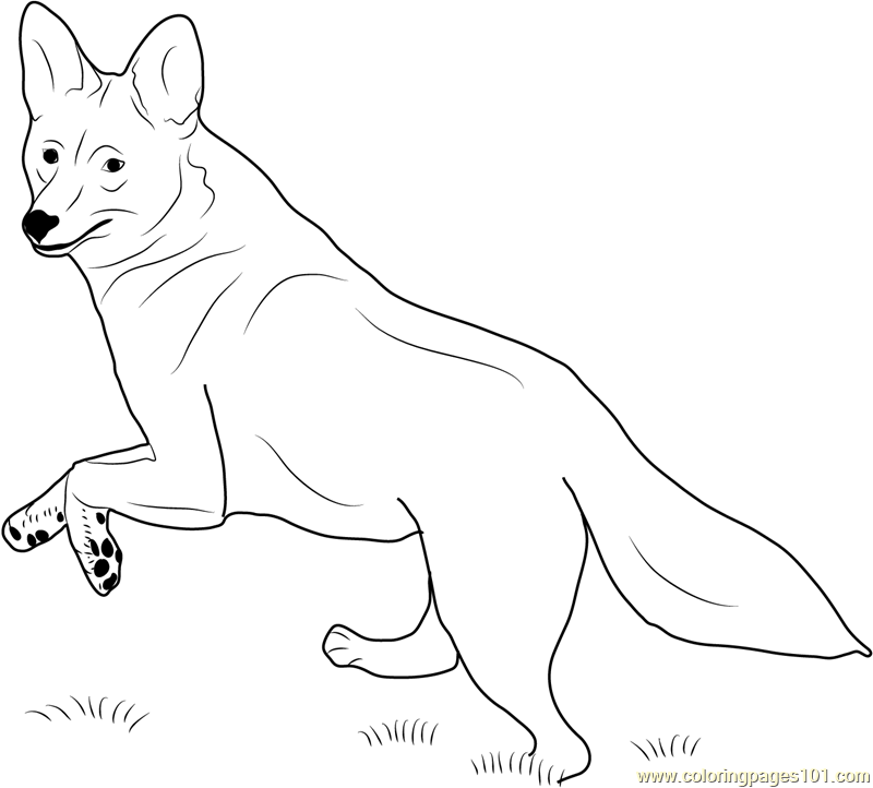 coyote running coloring page - Coyote Coloring Page