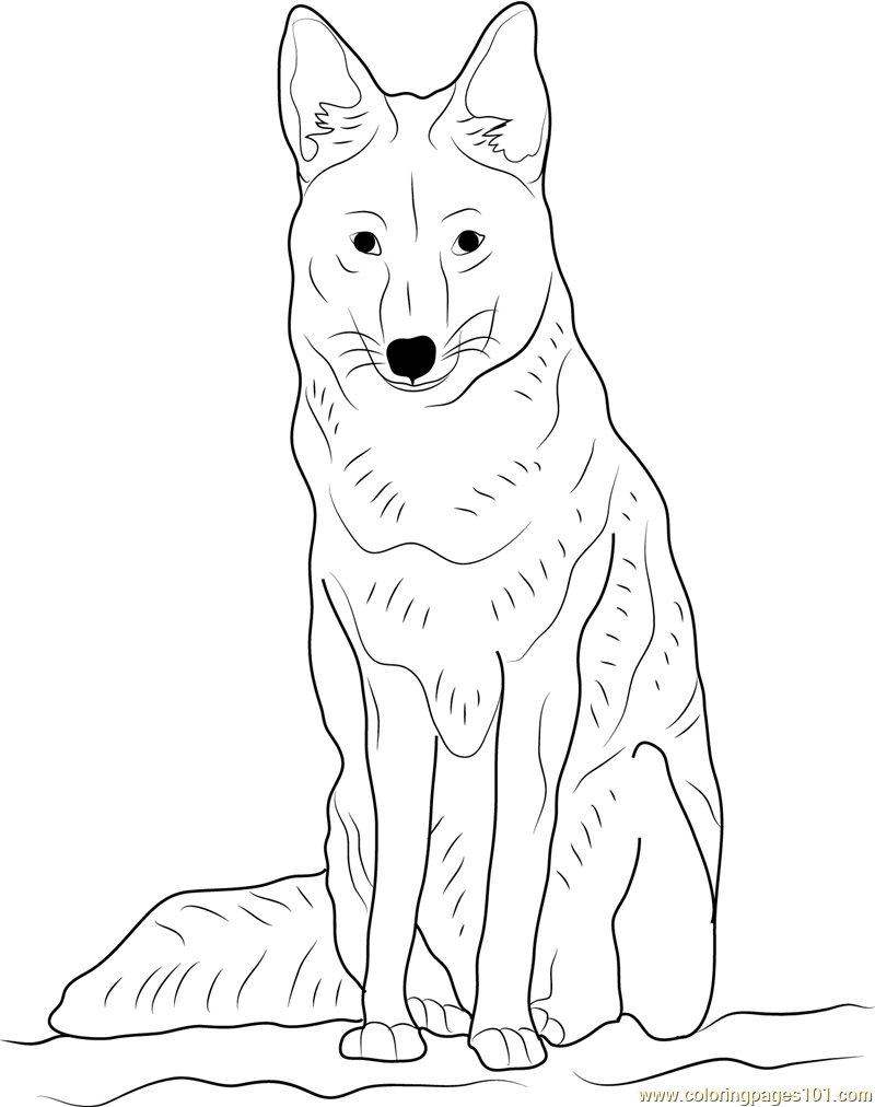 Coyote Sitting Coloring Page