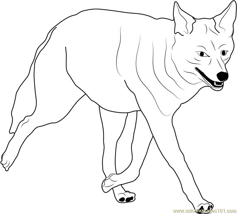 Coyote Walking Coloring Page Free Coyote Coloring Pages