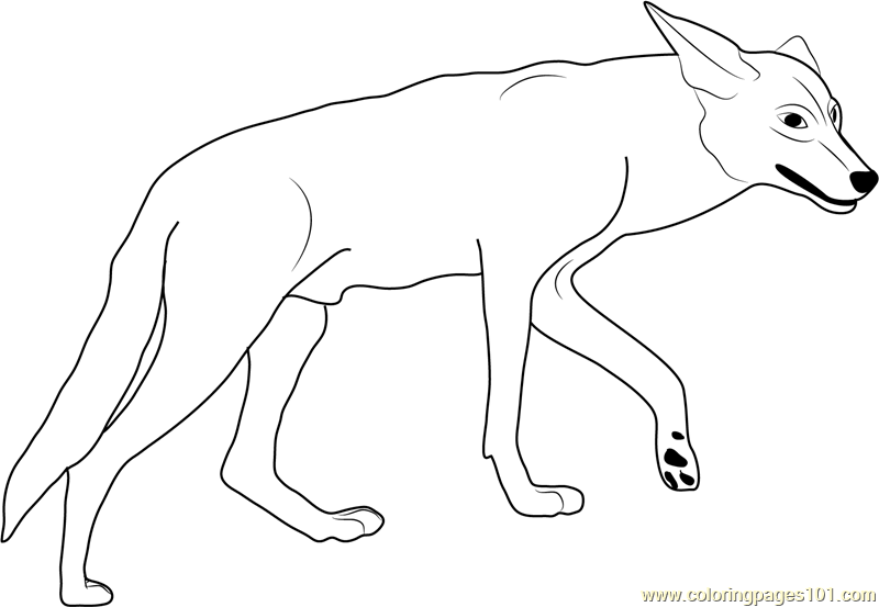coyote in california valley coloring page