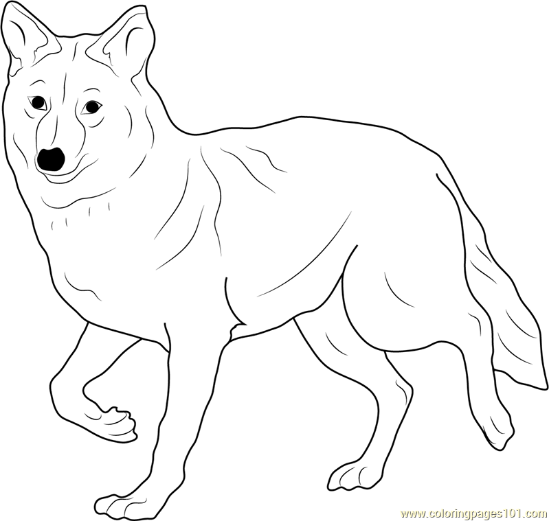 coyote pictures coloring pages - photo#30
