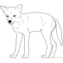 Baby Coyote coloring page