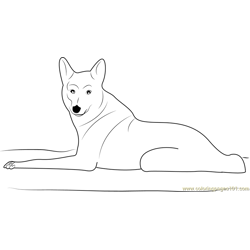 Coyote Looking at You Free Coloring Page for Kids
