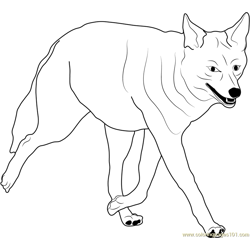 Coyote Walking Free Coloring Page for Kids