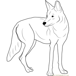 Western Coyote coloring page