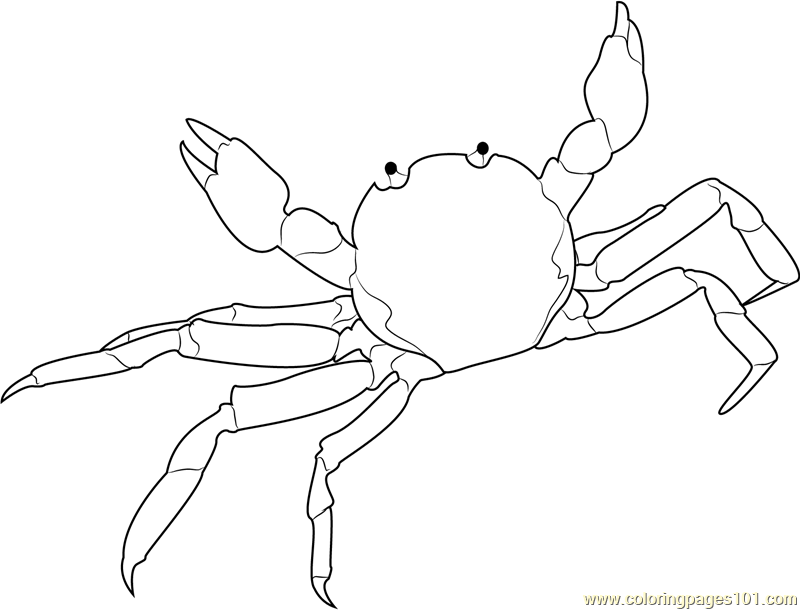 Chinese Mitten Crab Coloring Page