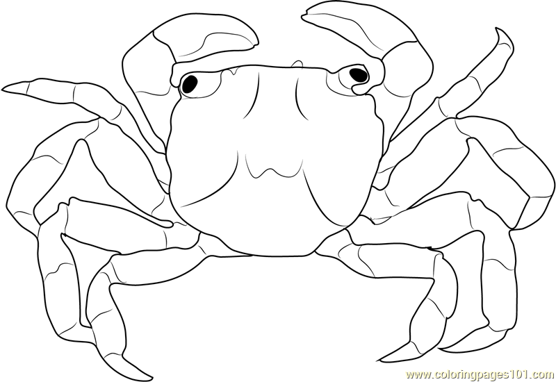 Christmas Island Red Crab Coloring Page