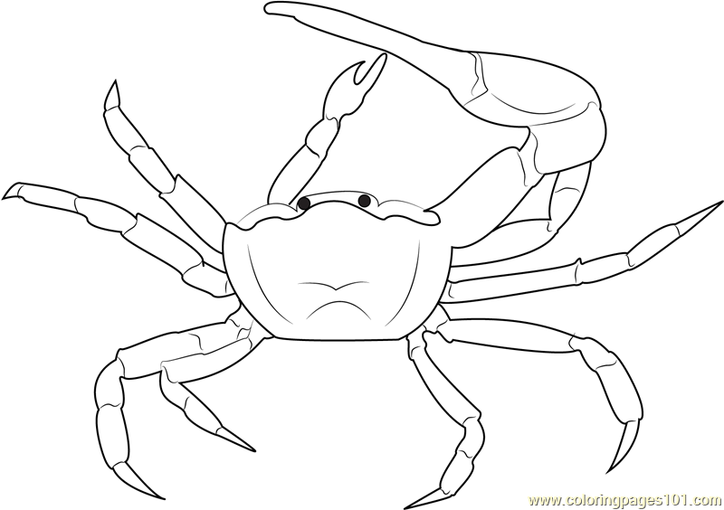 Gulf Mud Fiddler Crab Coloring Page Free Crab Coloring
