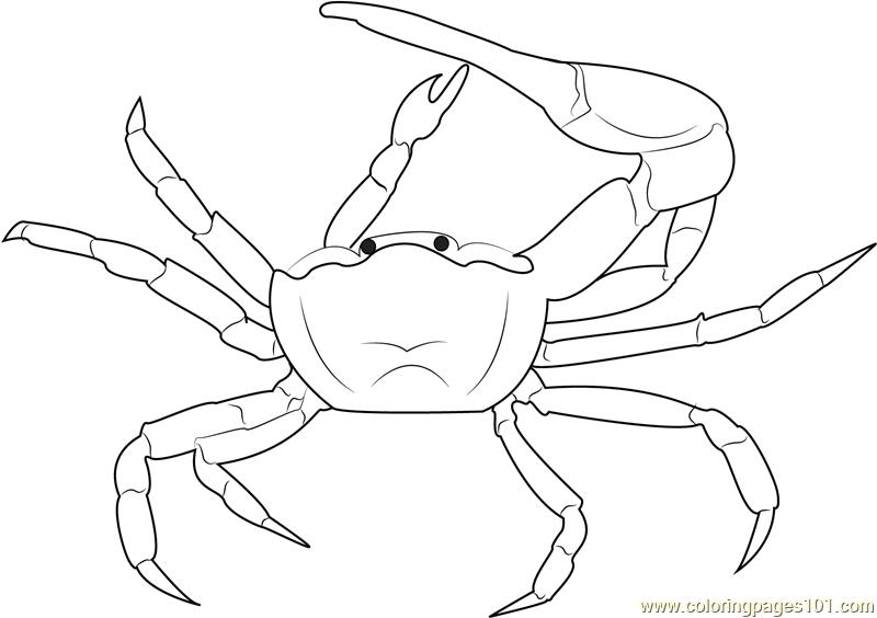 Gulf Mud Fiddler Crab Coloring Page Free Crab Coloring Pages Coloringpages Com