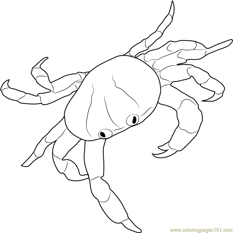 Gallery Of Red Land Crab Coloring Page With Crab Coloring Page
