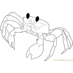 Florida Ghost Crab