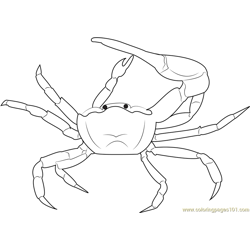 Gulf Mud Fiddler Crab coloring page