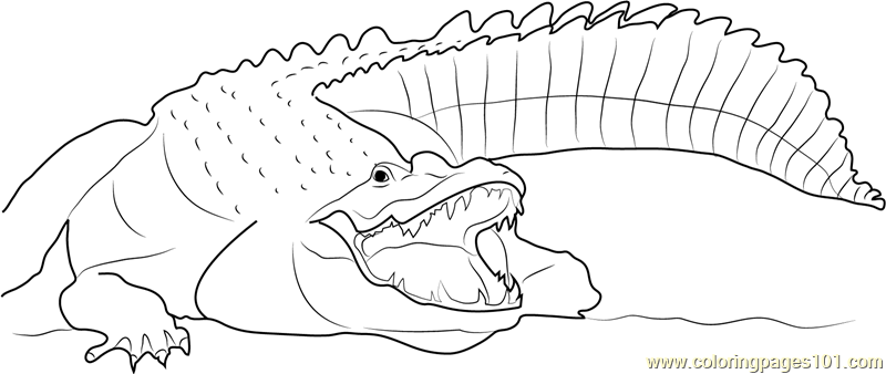 Adult Nile Crocodile Coloring Page
