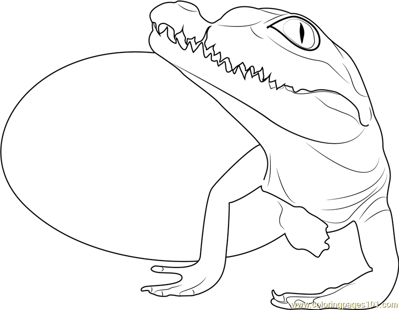 Baby Crocodile Hatchling Coloring Page Free Crocodile Coloring