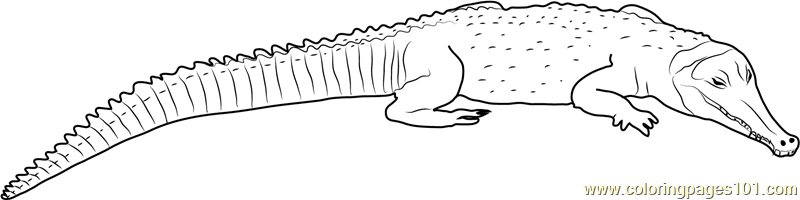 crocodile pokemon coloring pages - photo#27