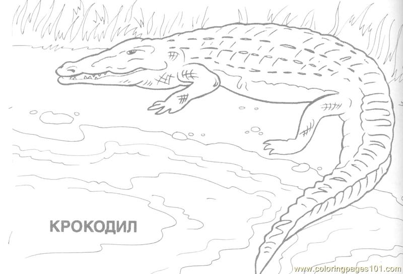 Crocodile Coloring Page - Free Crocodile Coloring Pages ...