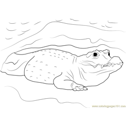 African Crocodile Free Coloring Page for Kids