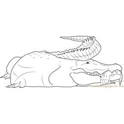 Crocodile having Human Hand Free Coloring Page for Kids