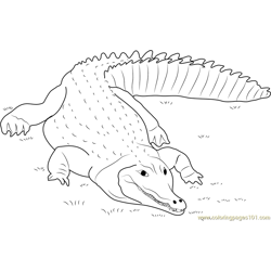 Crocodile lying on the Grass Free Coloring Page for Kids