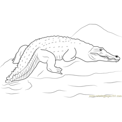 Crocodile on a Rock Free Coloring Page for Kids