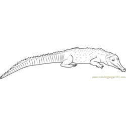 Snouted Crocodile Free Coloring Page for Kids