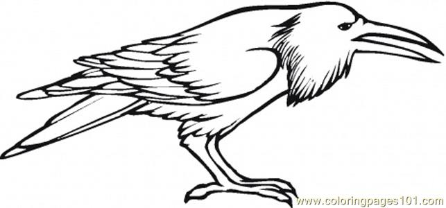 Crow Coloring Page Free Crow
