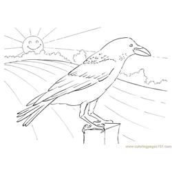 Crow looking Free Coloring Page for Kids