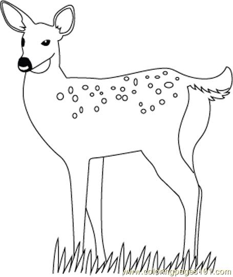 Animal Coloring Pages Deer Deer Coloring Pages Download