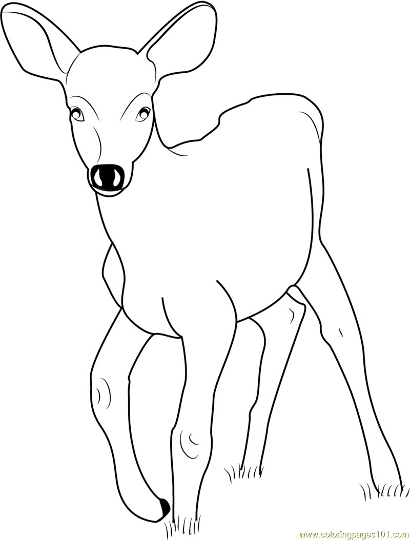 baby deer coloring pages - photo#17