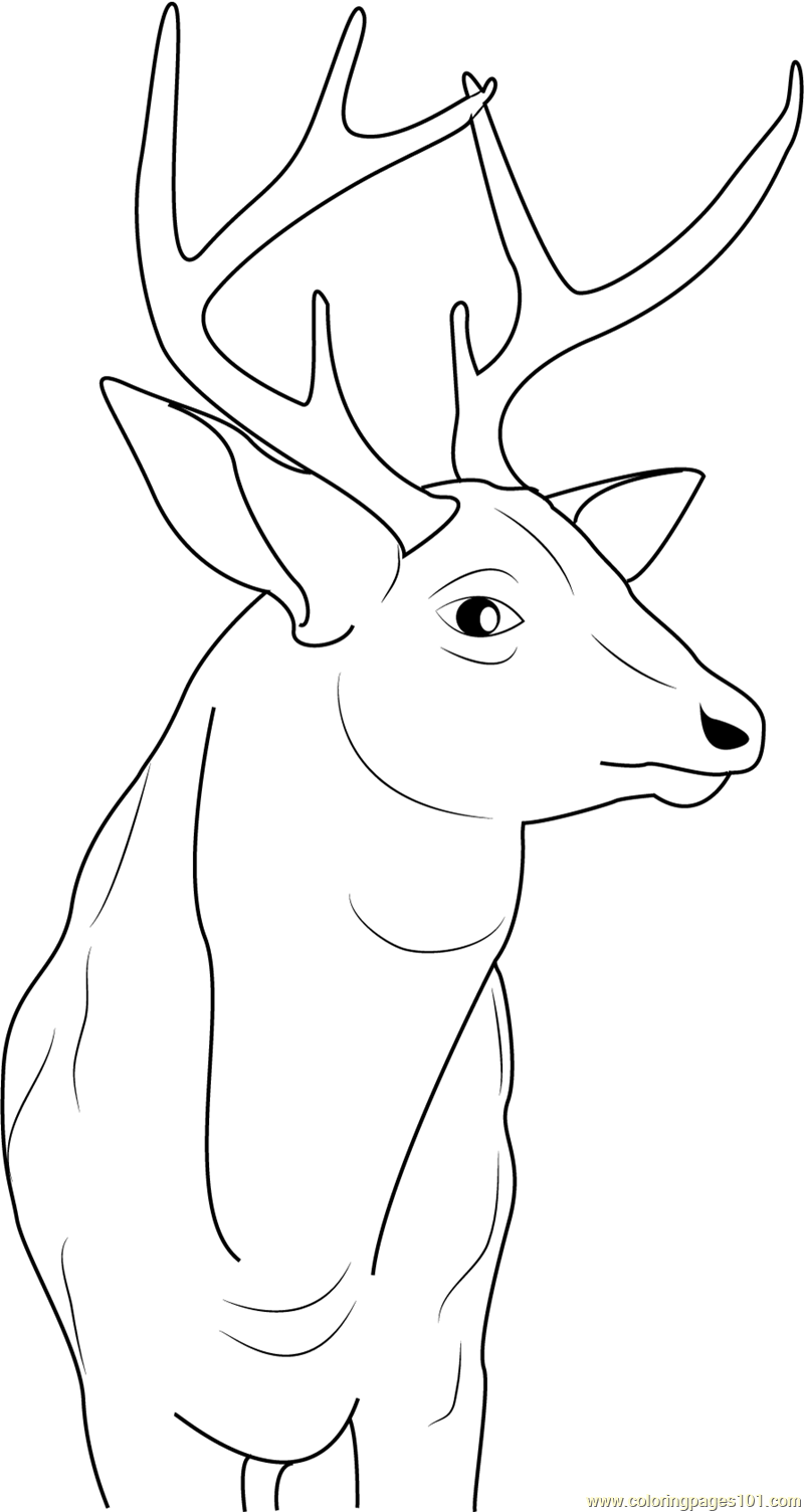 Buck Deer Coloring Page Free