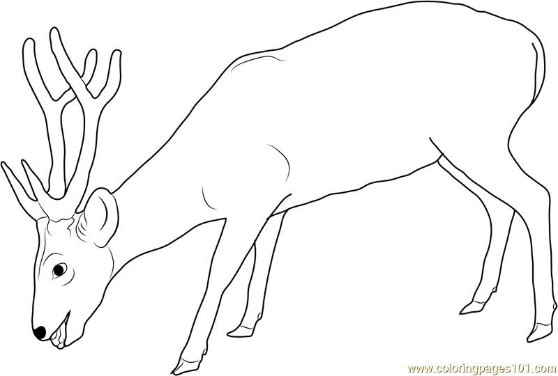 Deer Eating Coloring Page Free