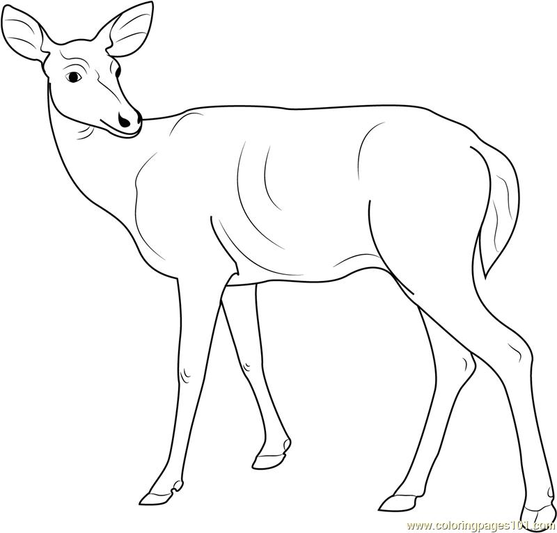 Deer Looking Back Coloring Page Free Deer Coloring Pages