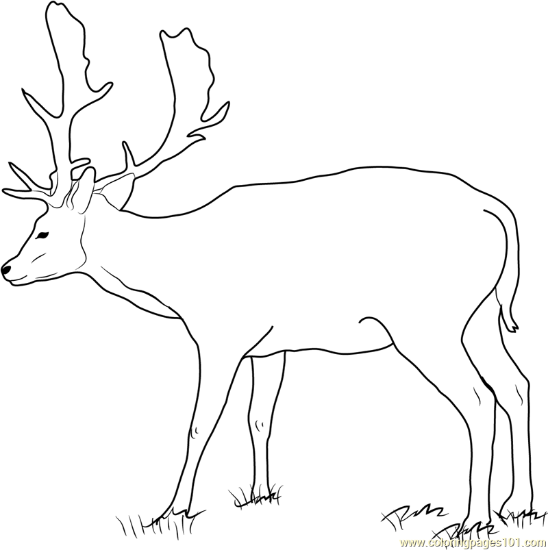 Fallow Buck Deer Coloring Page
