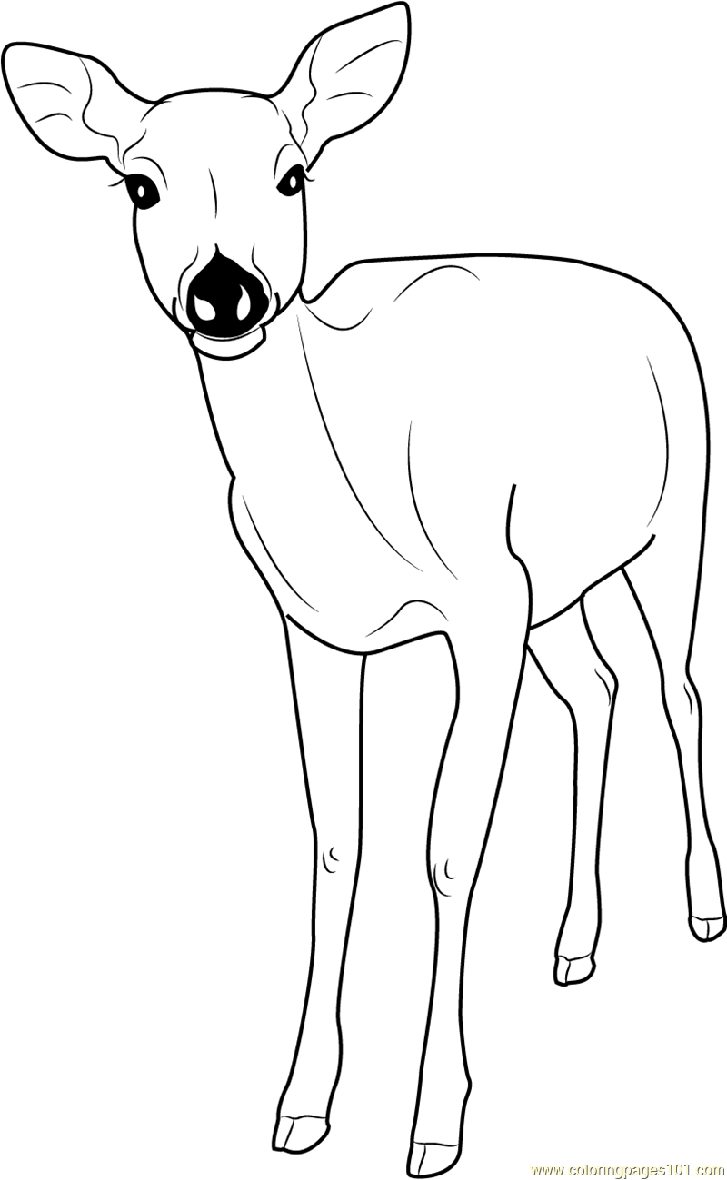 formosan sika deer coloring page - Deer Coloring Pages