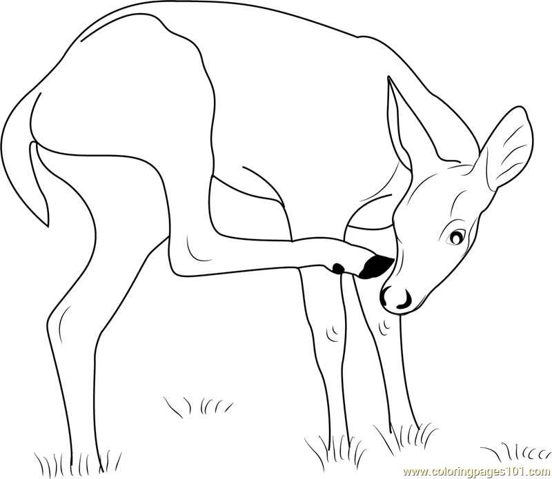 key deer coloring page
