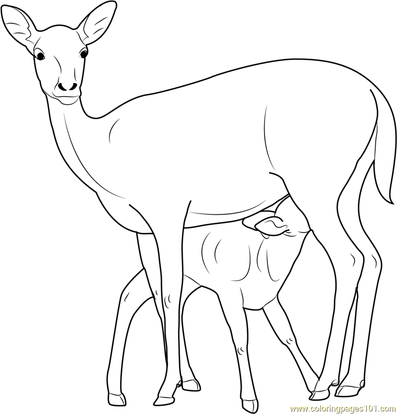 Mother and Baby Deer Coloring Page