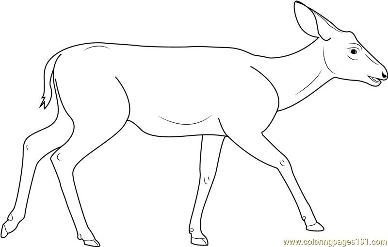 coloring pages mule deer | Mule Deer Coloring Page - Free Deer Coloring Pages ...