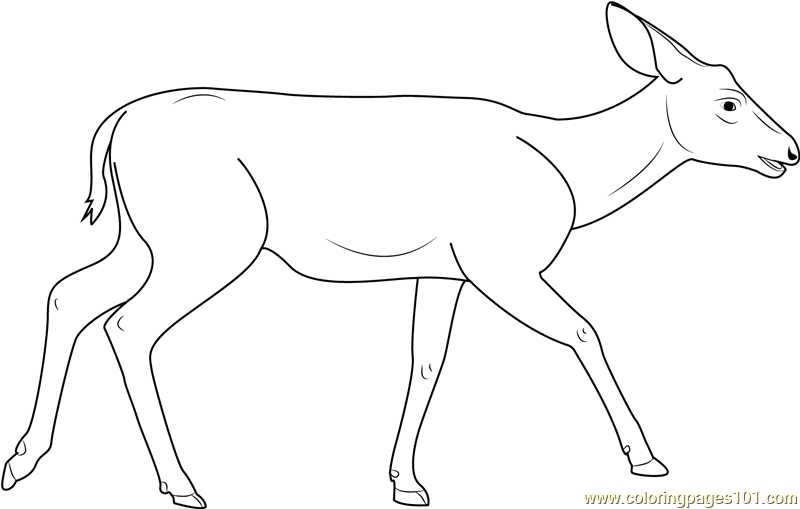 coloring pages mule deer - photo#21