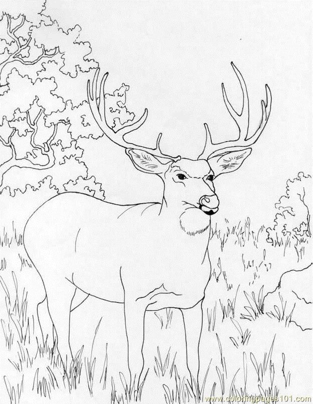 Muledeer Coloring Page - Free Deer Coloring Pages : ColoringPages101.com