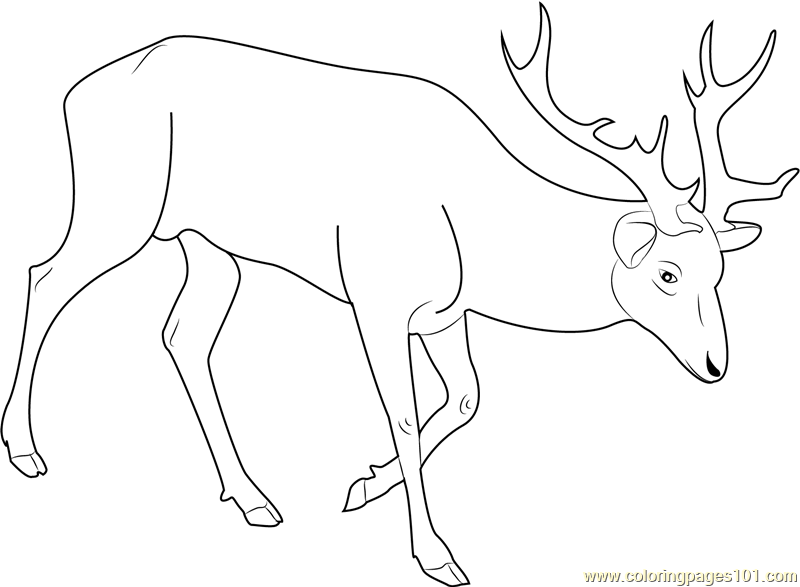 Red Deer Coloring Page Free Deer