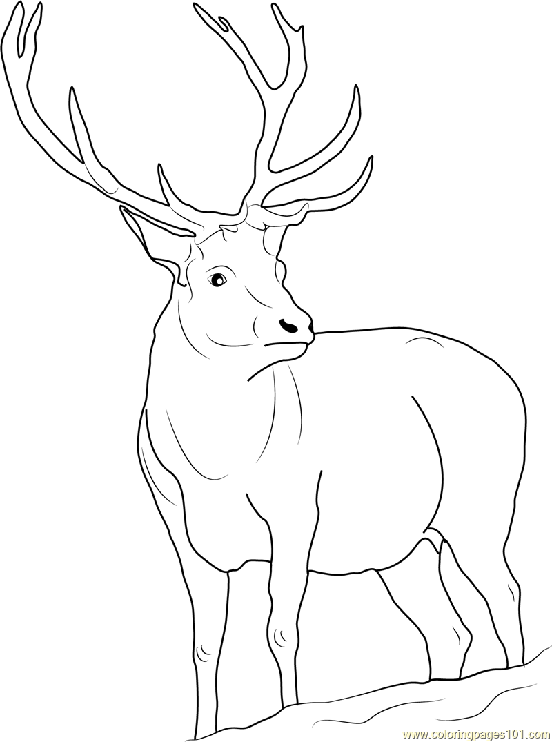 Reindeer Coloring Page - Free Deer Coloring Pages : ColoringPages101.com