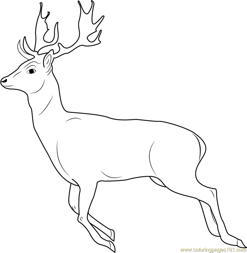Running Deer Coloring Page - Free Deer Coloring Pages ...