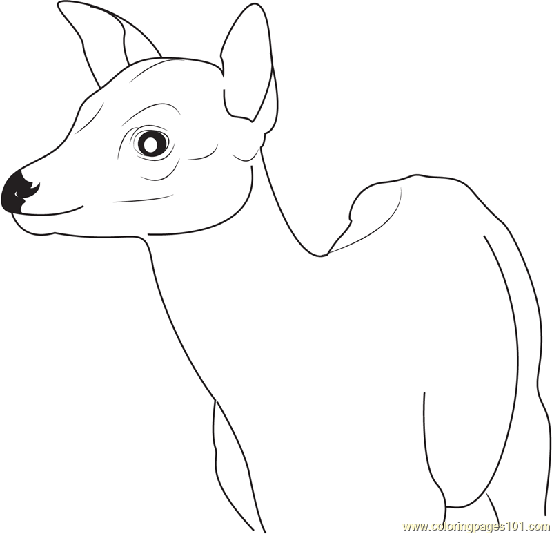 chester the cat coloring pages - photo#9