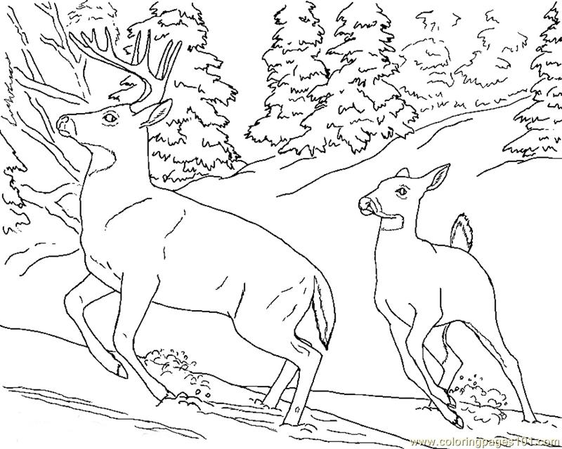 Deer doe buck snow Coloring Page Free Deer Coloring Pages