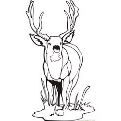 Deer luking ahead Free Coloring Page for Kids