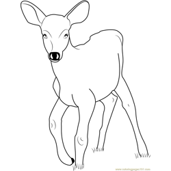 Baby Deer Free Coloring Page for Kids